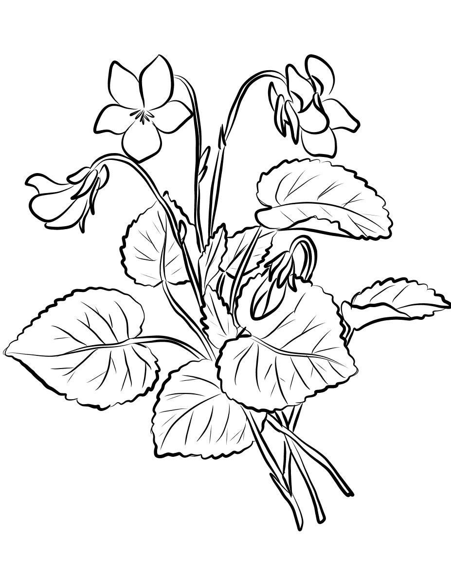violet flower coloring page violet coloring pages download and print violet coloring page coloring violet flower