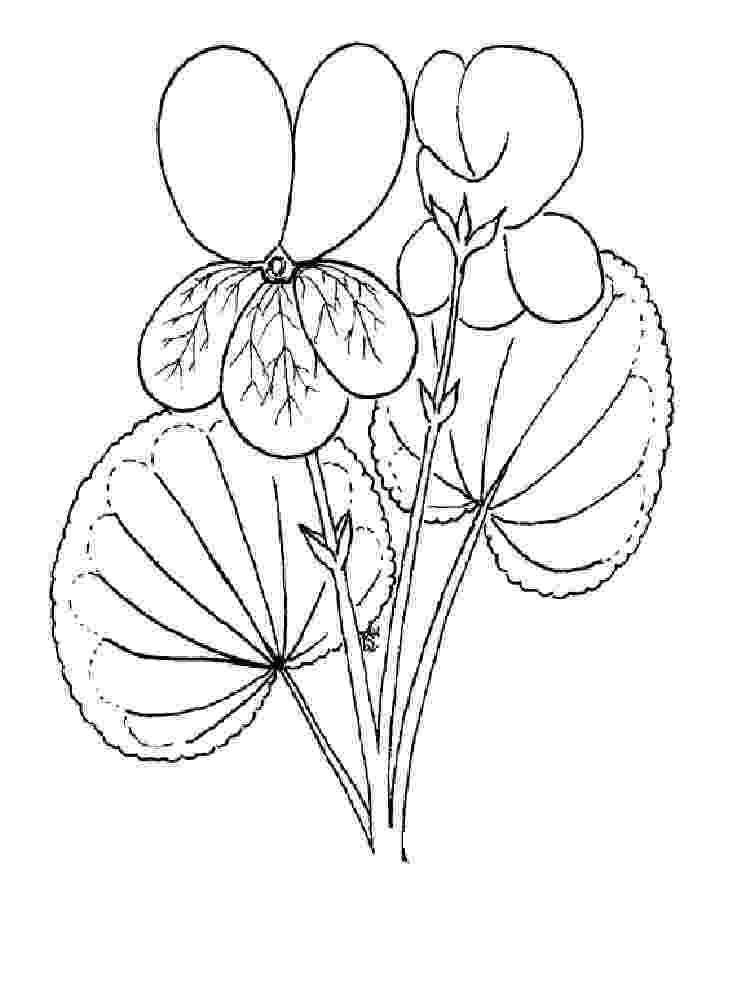 violet flower coloring page violet coloring pages download and print violet coloring violet coloring page flower