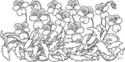 violet flower coloring page violet coloring pages to download and print for free violet coloring page flower