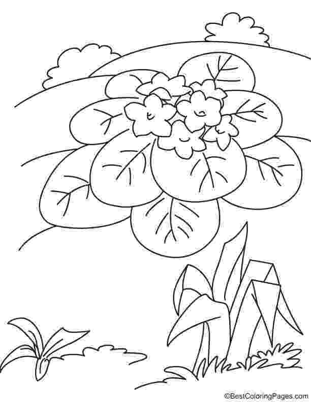 violet flower coloring page violet flower coloring page download free violet flower flower coloring violet page