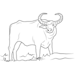 water buffalo coloring page stay at home toddler october 2010 coloring buffalo water page