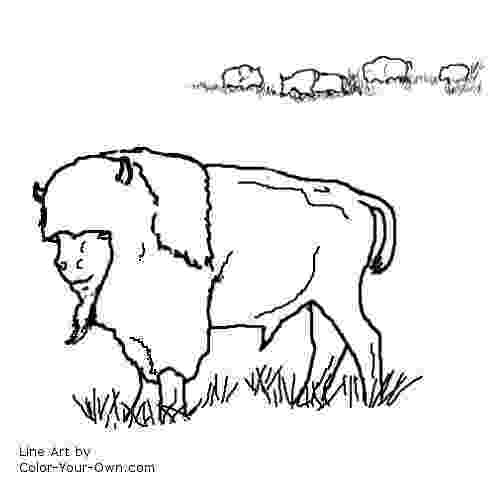 water buffalo coloring page water buffalo coloring page coloring home page coloring water buffalo