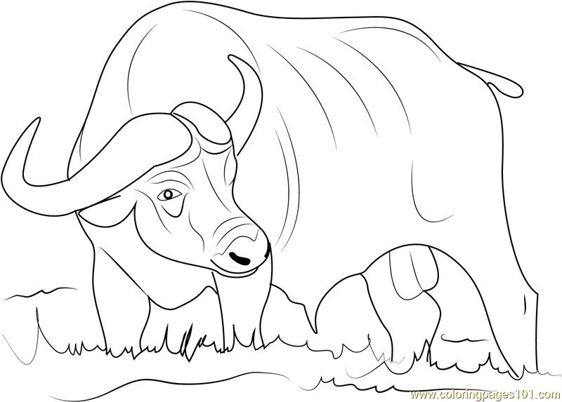 water buffalo coloring page water buffalo coloring pages food ideas buffalo water page coloring
