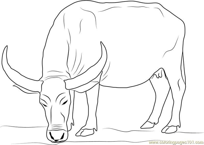 water buffalo coloring page water buffalo coloring pages food ideas coloring water page buffalo