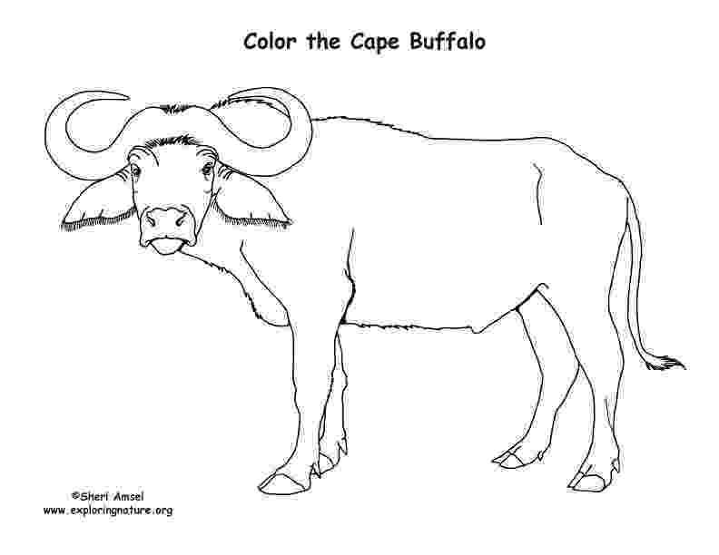 water buffalo coloring page water buffalo coloring pages food ideas page water coloring buffalo