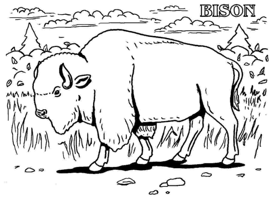 water buffalo coloring page water buffalo coloring pages page water buffalo coloring
