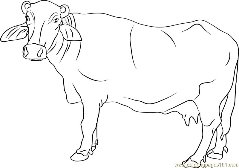 water buffalo coloring page water buffalo coloring pages water page coloring buffalo