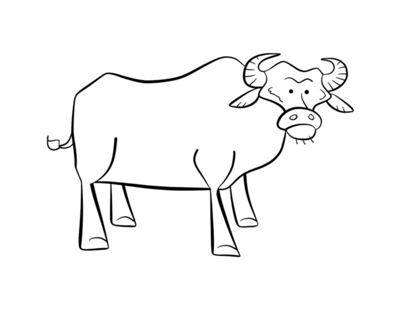 water buffalo coloring page water buffalo coloring sheet page buffalo water coloring