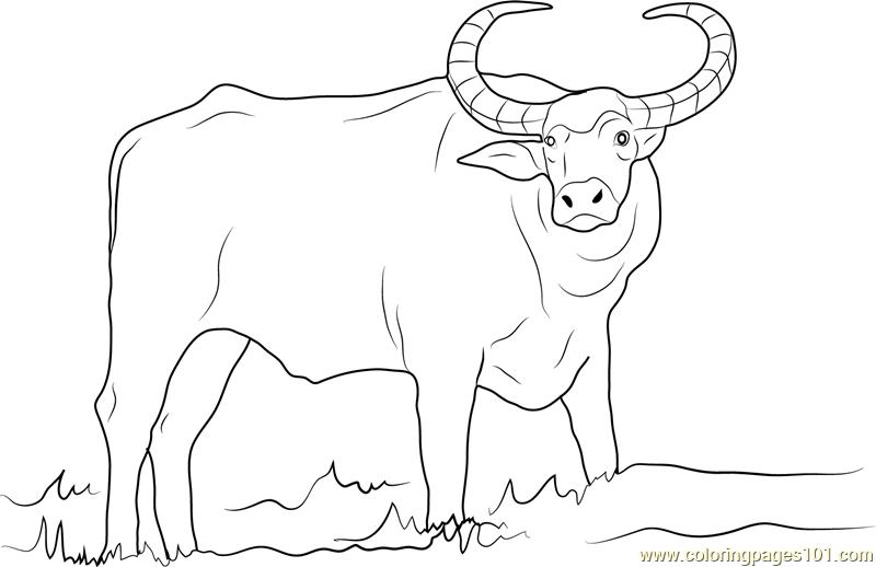 water buffalo coloring page wild water buffalo coloring online super coloring page buffalo coloring water