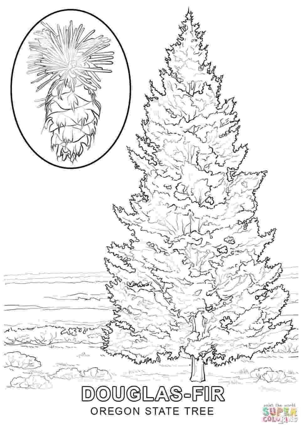 western hemlock coloring page western hemlock coloring tree coloring coloring pages hemlock coloring western page