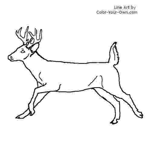 whitetail deer coloring pages deer coloring pages getcoloringpagescom coloring pages whitetail deer