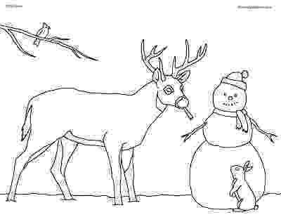whitetail deer coloring pages deer coloring pictures to print free printable coloring coloring deer whitetail pages