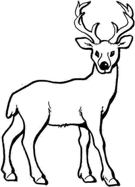 whitetail deer coloring pages free free printable deer silhouette download free clip deer whitetail coloring pages
