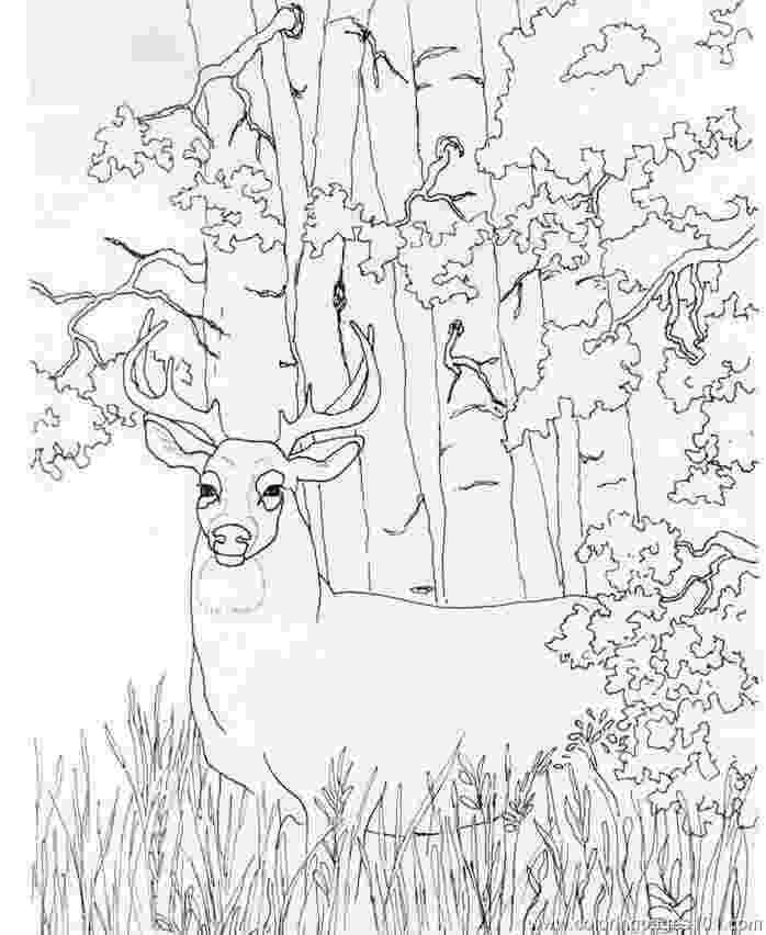 whitetail deer coloring pages free printable fall coloring pages halloween coloringsnet coloring pages deer whitetail