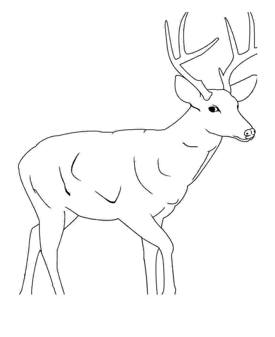 whitetail deer coloring pages mule deer buck coloring page free printable coloring pages whitetail deer pages coloring