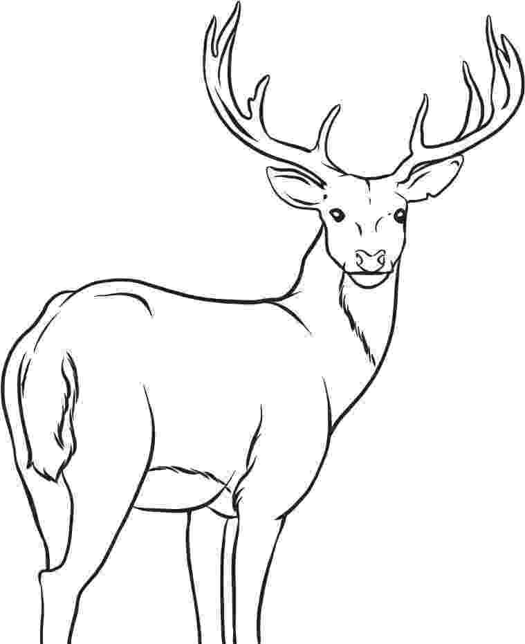 whitetail deer coloring pages realistic deer coloring pages at getcoloringscom free deer whitetail coloring pages