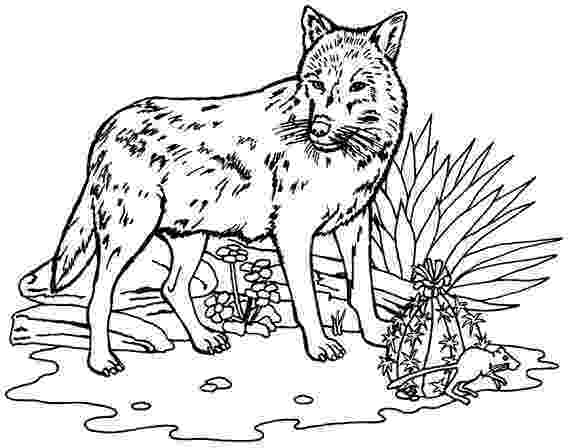 wolf for coloring free printable wolf coloring pages for kids coloring coloring wolf for