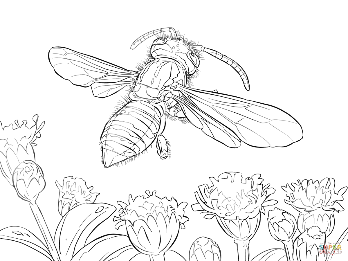 yellow jacket coloring page western yellow jacket coloring page free printable coloring jacket yellow page