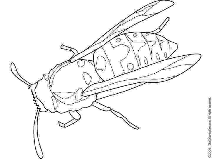 yellow jacket coloring page y is for yellowjacket coloring page twisty noodle yellow jacket page coloring