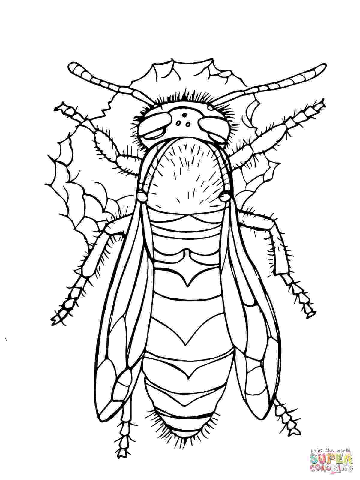 yellow jacket coloring page yellow jacket audio stories for kids free coloring jacket yellow coloring page