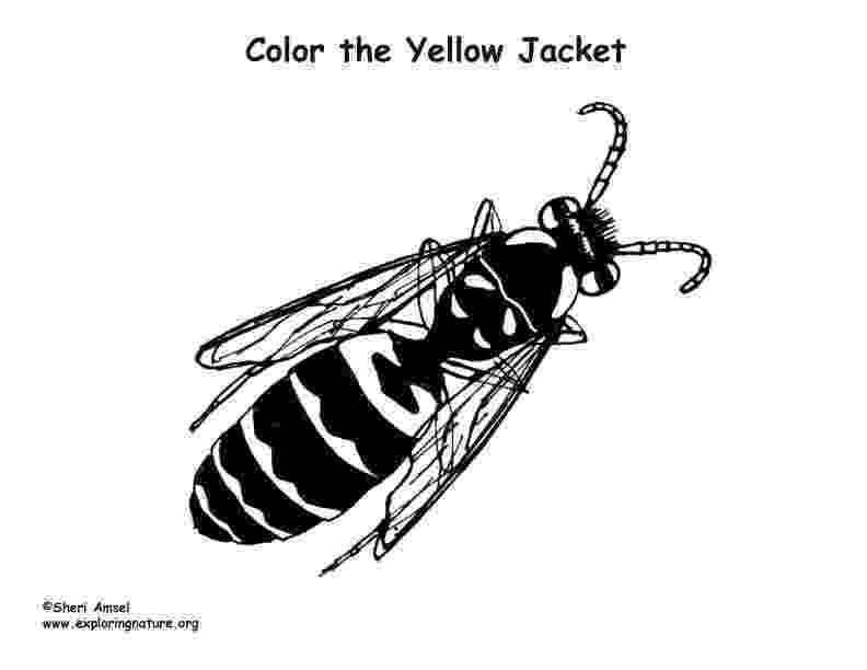 yellow jacket coloring page yellow jacket drawing at getdrawingscom free for jacket coloring page yellow