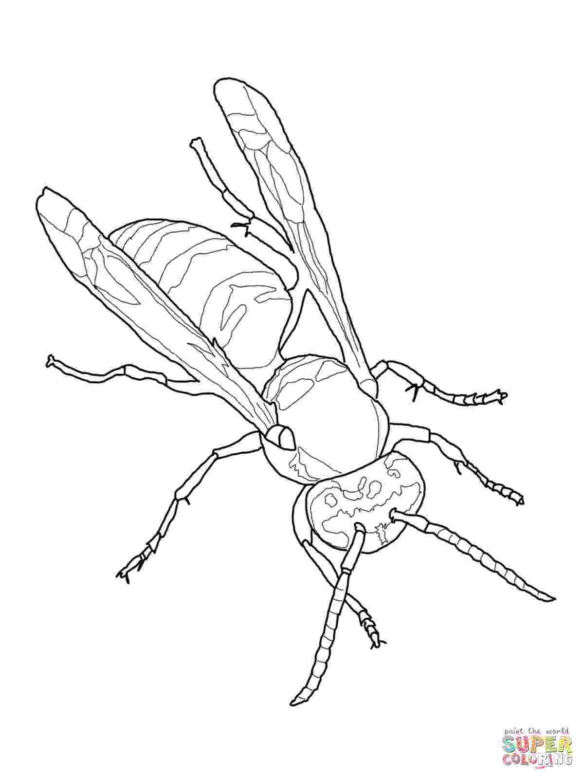 yellow jacket coloring page yellow jacket wasp coloring page free printable coloring page coloring yellow jacket