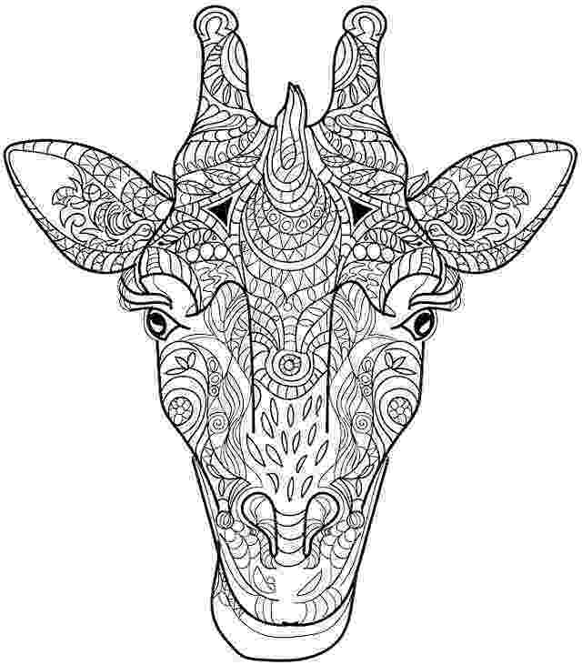 adult coloring pages animals 809 best animal coloring pages for adults images on adult coloring pages animals