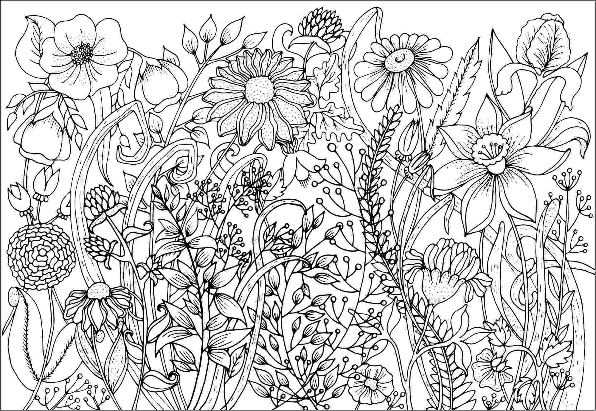 adult flower coloring pages dahlia color one of the most beautiful flowers from the pages adult flower coloring