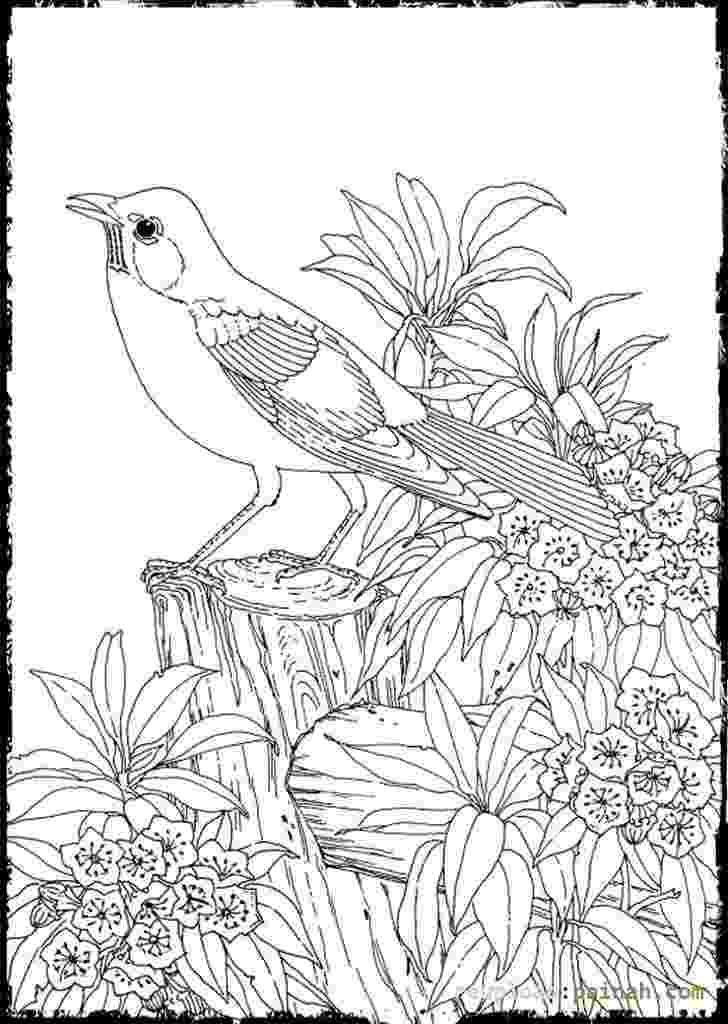 advanced coloring sheets advanced coloring pages the sun flower pages coloring advanced sheets