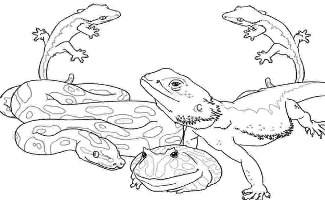 african animals coloring pages african animals coloring pages getcoloringpagescom pages animals coloring african