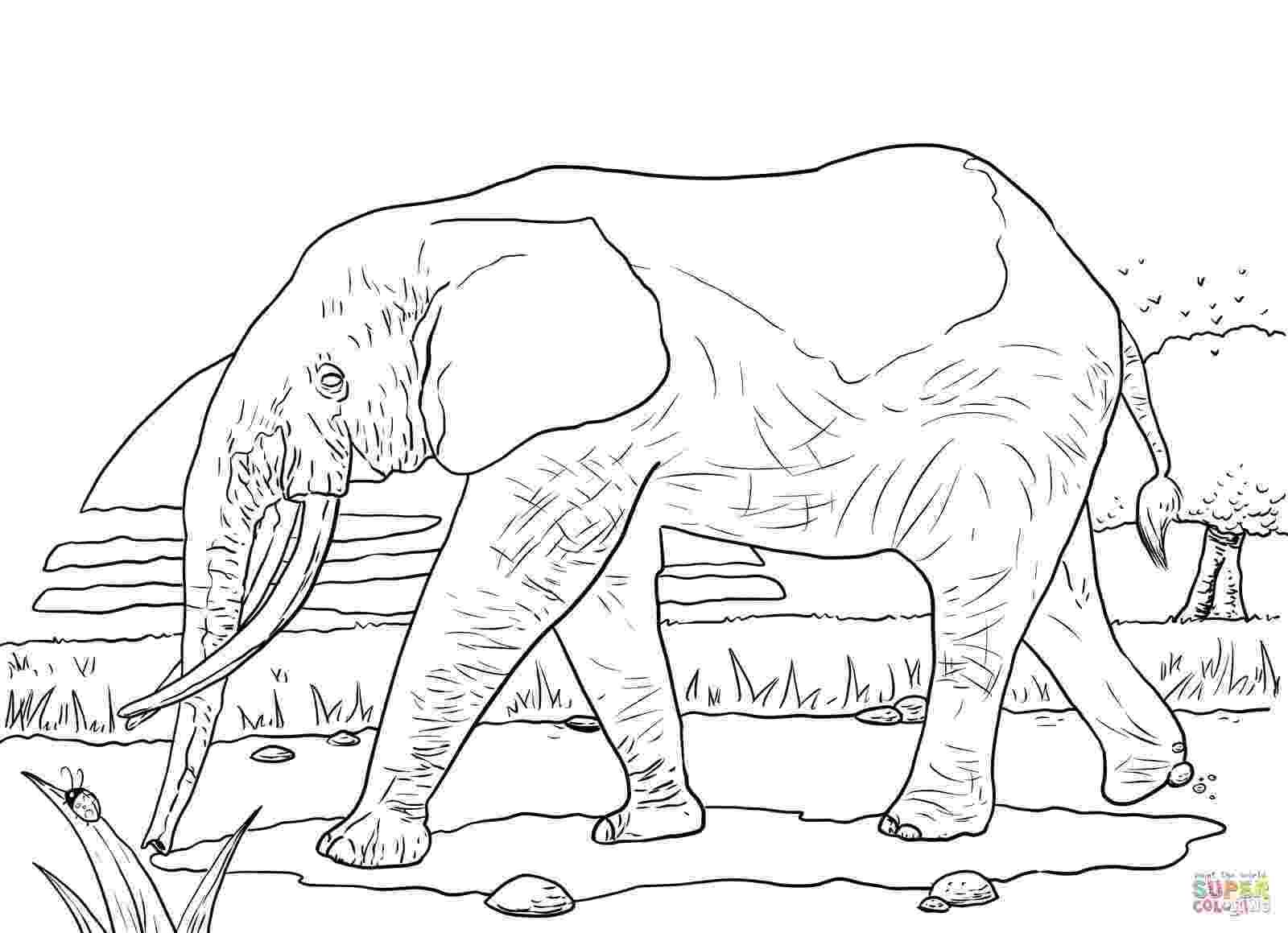 african savanna coloring pages coloring pages african lady and zebra countries gt africa african pages savanna coloring