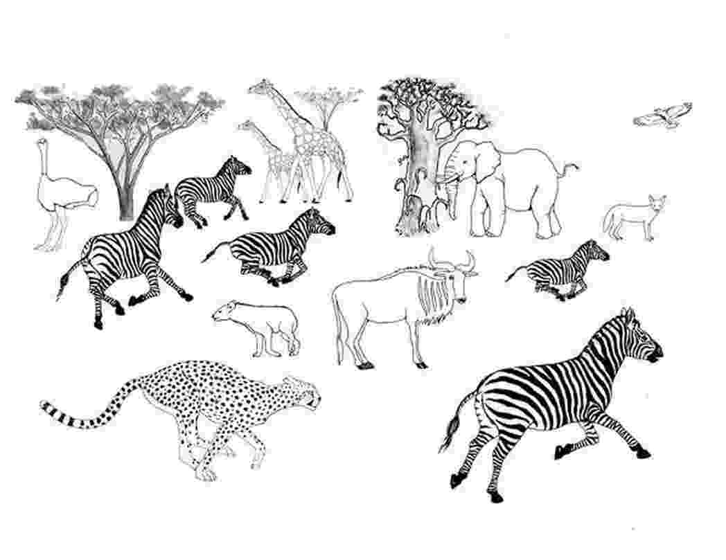 african savanna coloring pages safari or african savanna animals free printable pages savanna coloring african