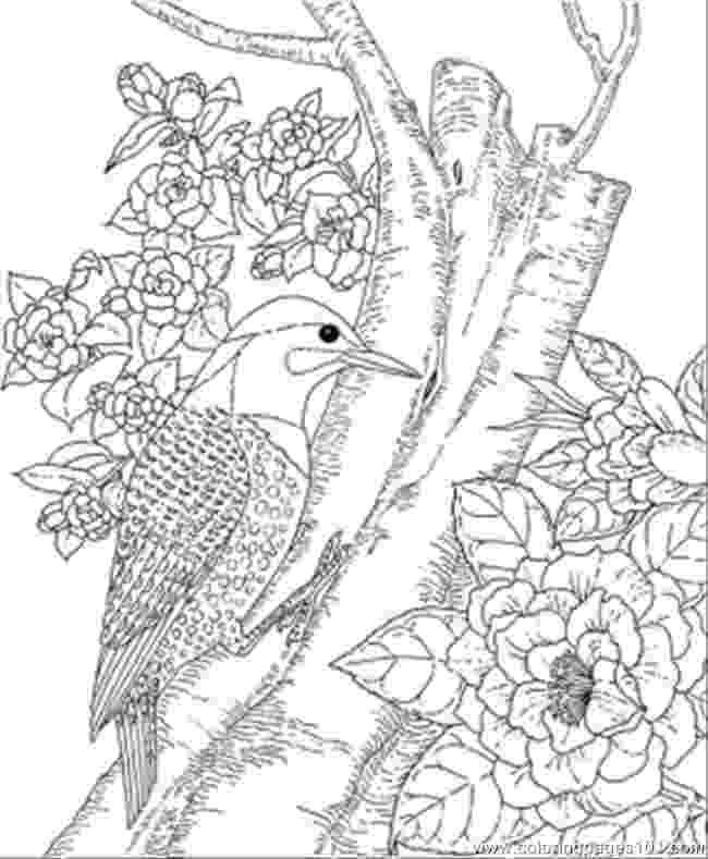 alabama state bird alabama state bird coloring page coloring home alabama state bird 1 1