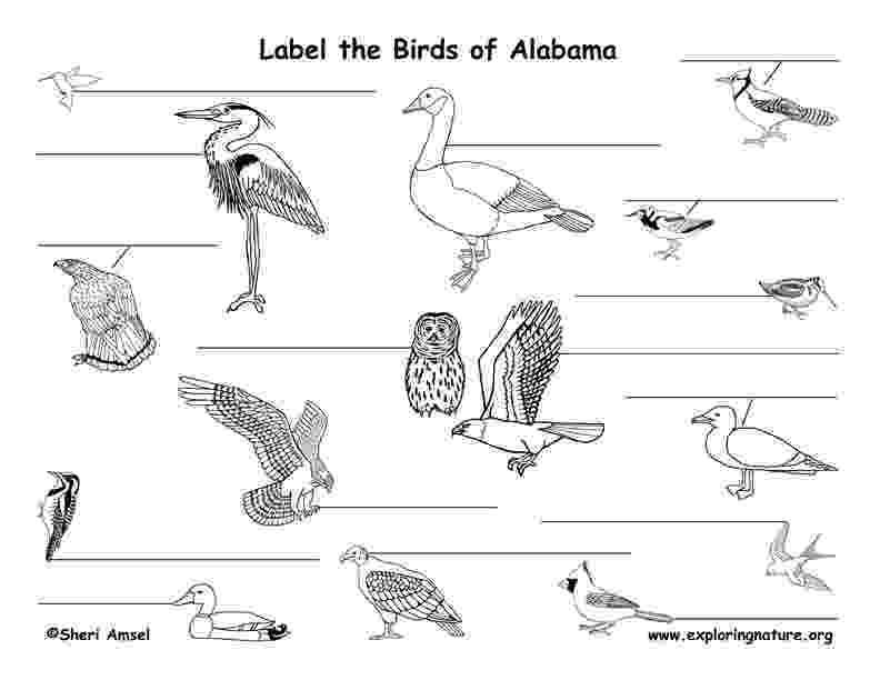 alabama state bird alabama state bird coloring page coloring home alabama state bird 1 2