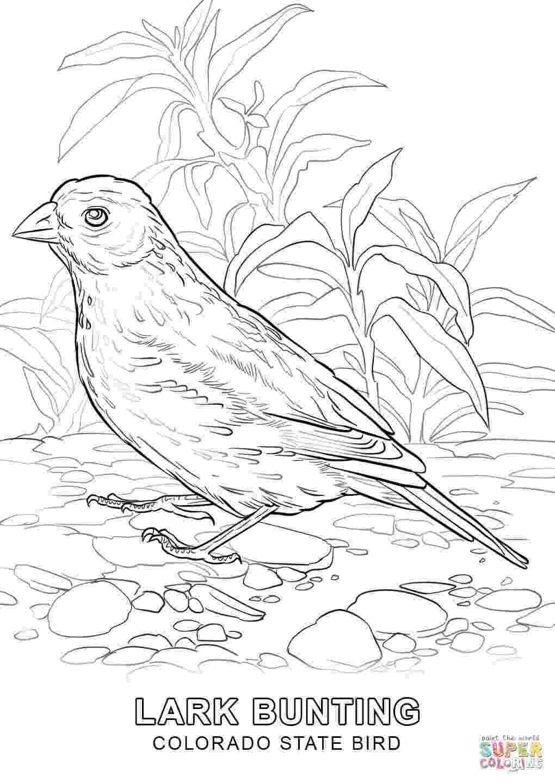 alabama state bird alabama state bird coloring page coloring home bird state alabama