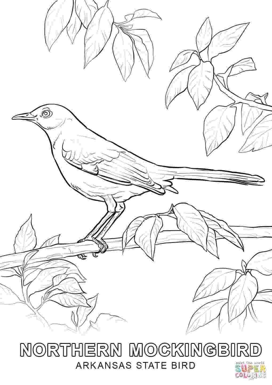 alabama state bird alabama state bird coloring page coloring home state bird alabama