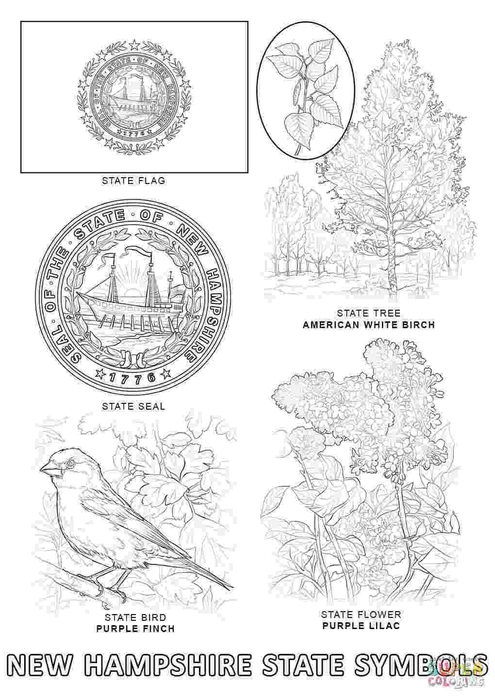 alabama state bird alabama state bird coloring page coloring home state bird alabama 1 1