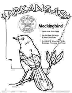 alabama state bird alabama state bird coloring page free usa coloring pages state bird alabama