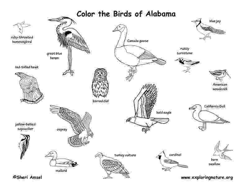 alabama state bird flower page printable coloring sheets flower coloring bird state alabama