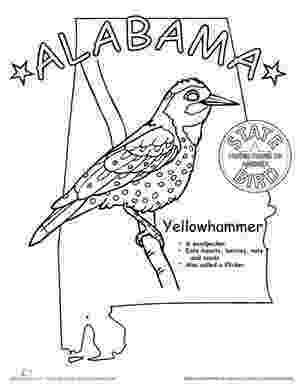 alabama state bird northern flicker bird royalty free stock photo image bird state alabama