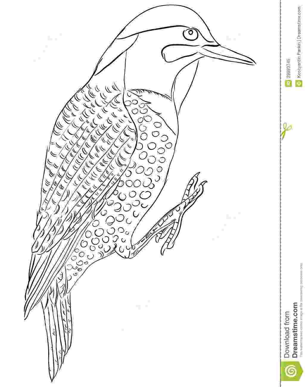 alabama state bird yellowhammer coloring page state alabama bird