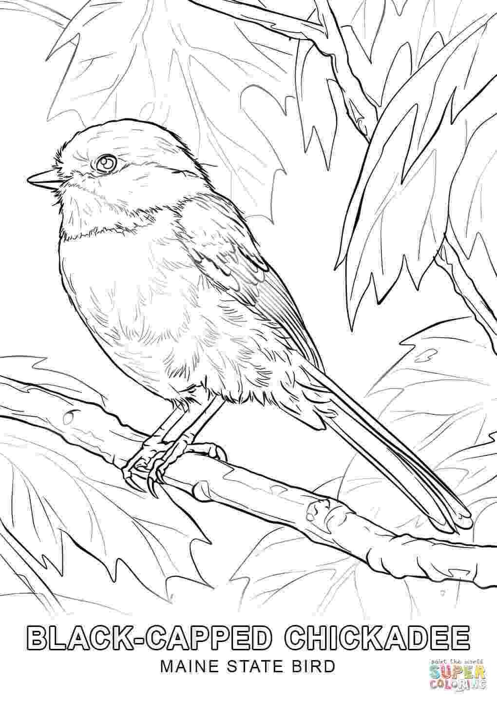 alabama state bird yellowhammer state bird of alabama dot to dot printable state bird alabama