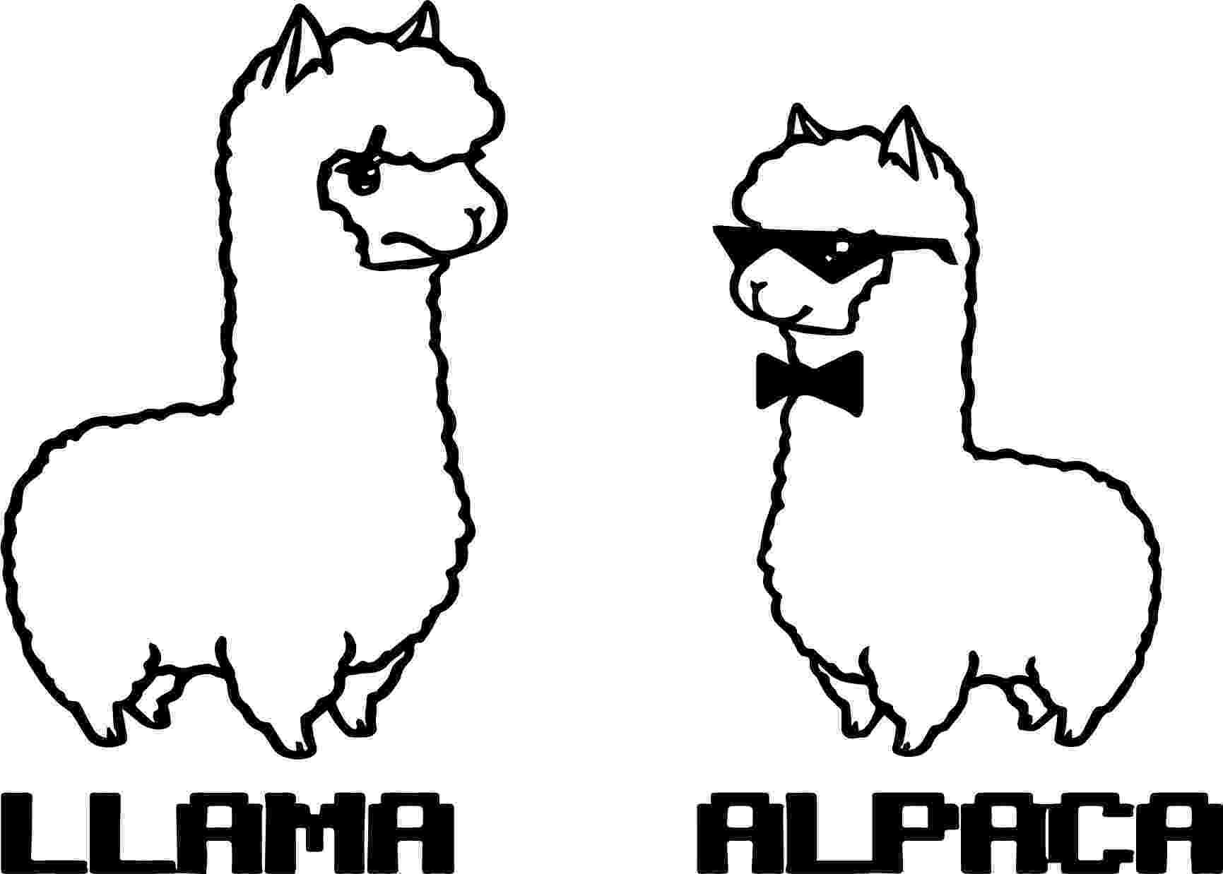 alpaca coloring pages cute alpaca coloring page free printable coloring pages coloring alpaca pages