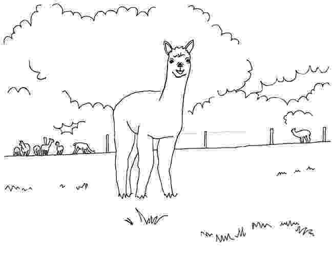 alpaca coloring pages farm animal coloring pages pages coloring alpaca