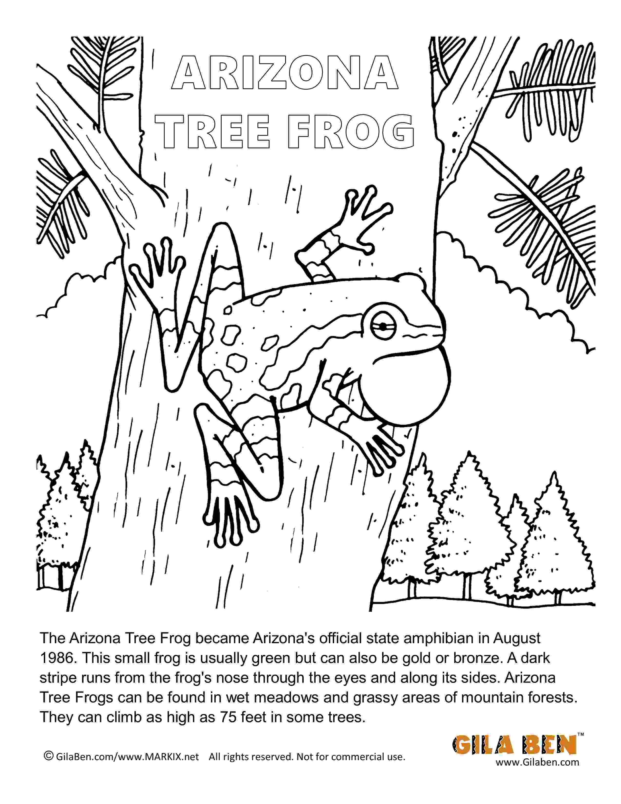 amphibian coloring pages 440 best images about montessori on pinterest pages coloring amphibian
