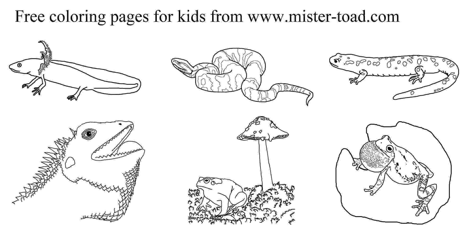 amphibian coloring pages amphibian and reptile coloring pages coloring amphibian pages