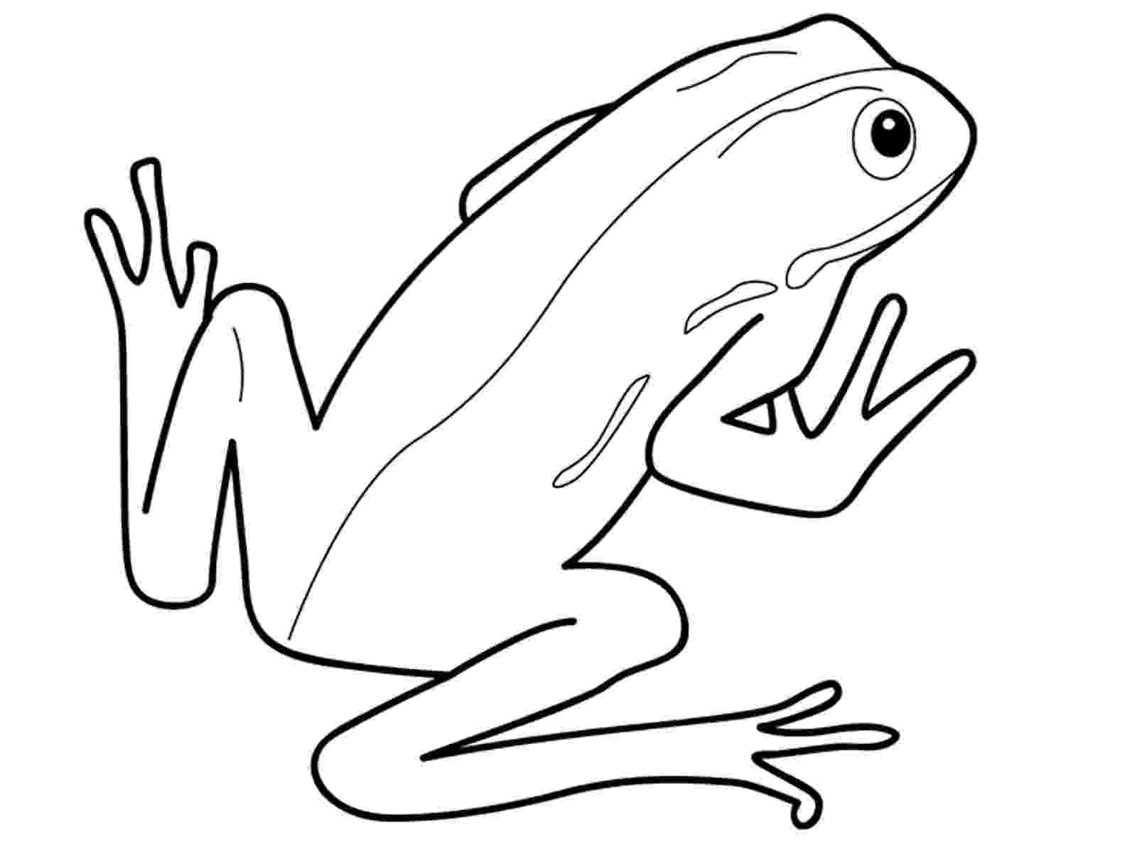 amphibian coloring pages amphibian coloring pages cswd pages coloring amphibian