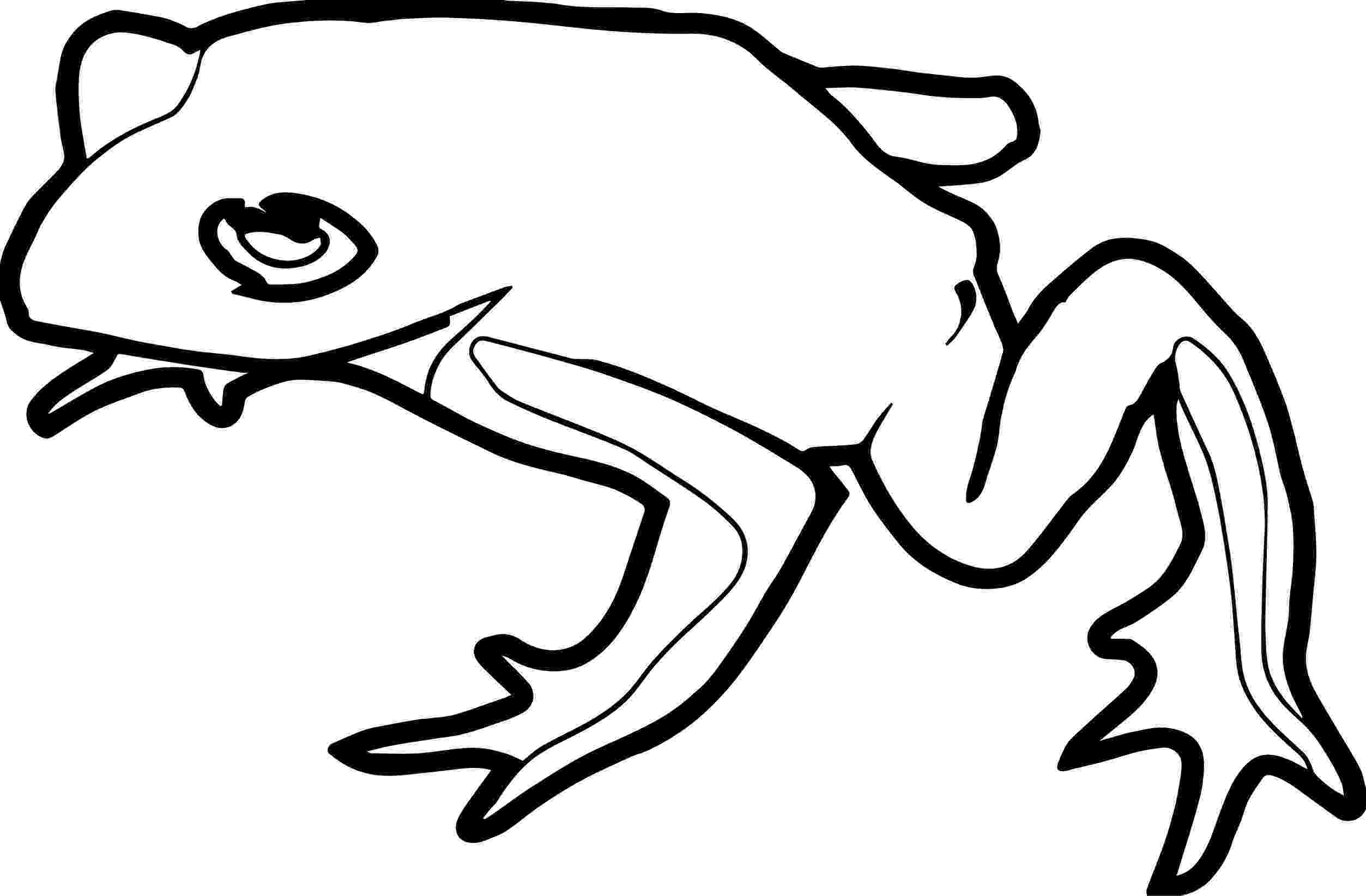 amphibian coloring pages best 13 coloring pages dragons lizards dinosaurs coloring amphibian pages