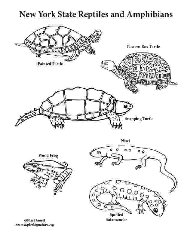amphibian coloring pages california habitats mammals birds amphibians reptiles coloring amphibian pages