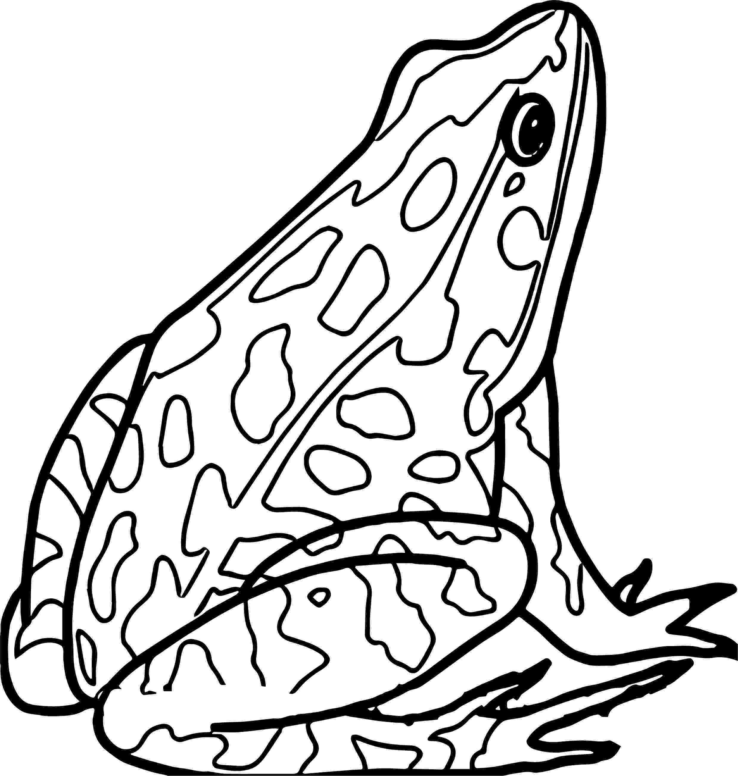 amphibian coloring pages california habitats mammals birds amphibians reptiles coloring amphibian pages 1 1
